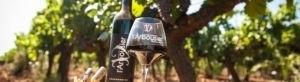 Photo bandeau - Composition Vin bouteille verre - Vigne - Gourmandise rouge - Domaine Saint Jean de l'Arbousier