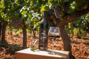 Photo 3 composition - bouteille de vin - verre de vin rouge - vignes - Gourmandise rouge