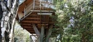 Photo 3 - Oenotourisme - cabane dans les arbres - Tourterelle - Domaine de l'Arbousier - Montpellier Hérault Tourisme