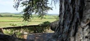 Photo - Oenotourisme - cabane dans les arbres - vue sur vignoble - Domaine de l'Arbousier - Montpellier Hérault Tourisme