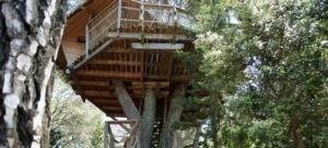 Photo 2 - Oenotourisme - cabane dans les arbres - Tourterelle - Domaine de l'Arbousier - Montpellier Hérault Tourisme