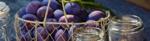Photo header mon panier - Prunes - domaine Saint Jean de l'Arbousier - Montpellier - Vignoble