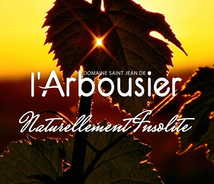 Header Responsive texte - Domaine saint Jean de l'Arbousier -vignoble - feuilles de vignes - coucher de soleil - naturellement insolite Montpellier