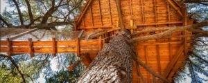 Photo - Oenotourisme - cabane dans les arbres - nature - Domaine de l'Arbousier - Montpellier Hérault Tourisme