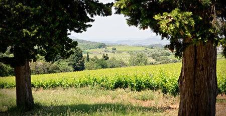 Photo Oenotourisme - Escapades vigneronnes - vue vignes été